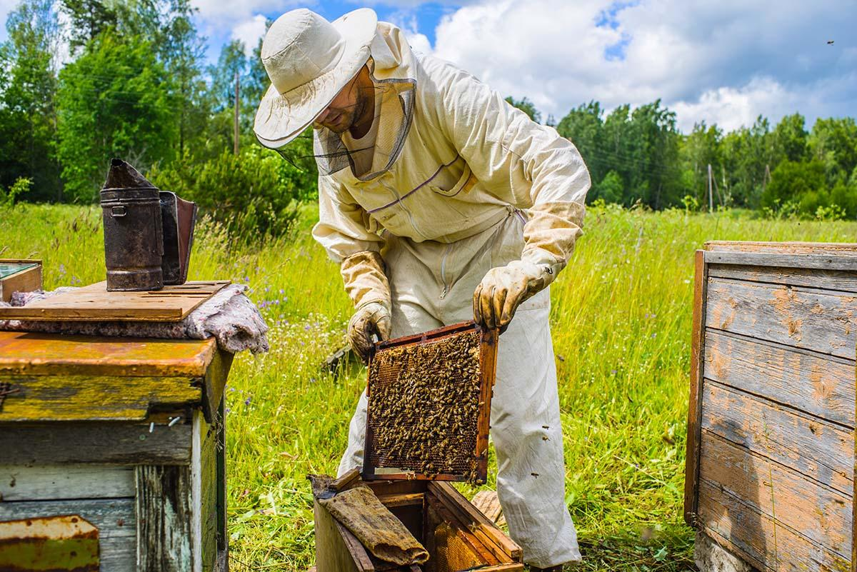 Learn the basics of beekeeping at Greene Library!